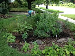 a guide to tucking in your rain garden for winter my green
