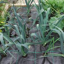 Methods Of Controlling Plant Diseases - the importance of plant protection