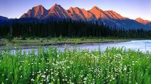 Flowers Near Me - rivers rocks summer beautiful sky river mountain flowers meadow