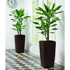 Self Watering Indoor Planters by Square Lechuza Cubico Self Watering Resin Planter Hayneedle