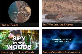 Animal Planet Documentary Grizzly Bears Full Documentaries - 50 netflix shows documentaries for animal lovers