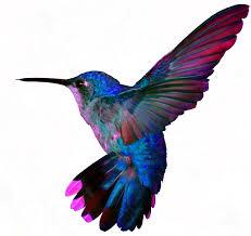 best 25 colorful hummingbird tattoo ideas on pinterest colour