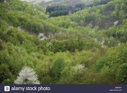 high mountain forest deciduous and evergreen trees central stock