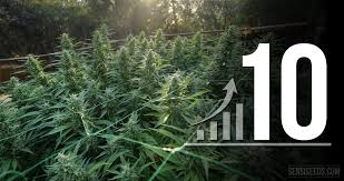 10 tips to maximize your cannabis grow space