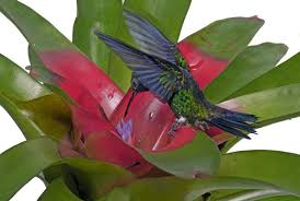Hummingbird On A Flower - hummingbirds national geographic magazine