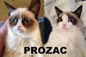 Grouchy Cat Meme - grumpy cat archives some pets