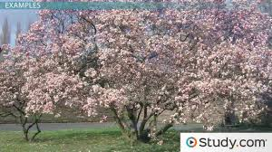 angiosperms characteristics definition u0026 examples video