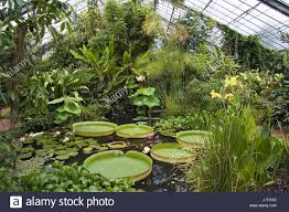Botanic Gardens Dundee The Tropical Glasshouse At Dundee Botanic Gardens Stock Photo