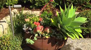 native plant fertiliser jason hodges presents charlie carp all purpose fertiliser youtube