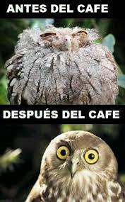 Meme Cafe - un gran café meme by sardina655 memedroid