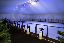 synthetic ice rink sales ice magic international
