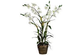 House Plant Save Spend Splurge House Plants Bricks U0026 Mortar The Times