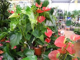 plante d駱olluante bureau chambre plante dépolluante plantes archives page de jardiner avec