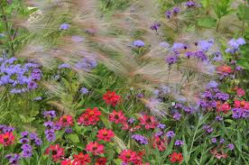 free images nature prairie bloom herb color botany flora
