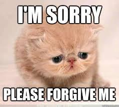 M Meme - 11 purrfect i m sorry memes random funny cat