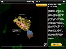 Virtual Frog Dissection Worksheet Frog Dissection Review For Teachers Common Sense Education
