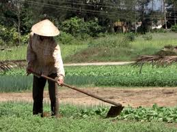 file peasant in the vegetable garden jpg wikimedia commons