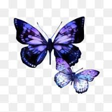 small butterfly png images vectors and psd files free