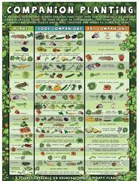 vegetable garden layout basics veggie gardener planning your