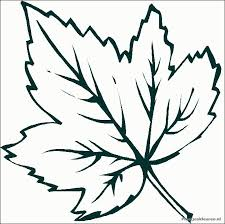 leaves to color and print coloring pages leaf coloring pages