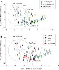 morphological and phenological reexamination of the threatened