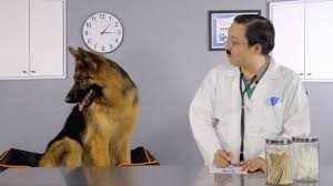 hill u0027s prescription diet sensitivities dog food youtube