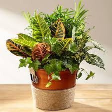 Green Plants Green Plant Indoor Green Plants Delivered By Ftd
