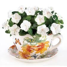 amazon com gifts u0026 decor butterfly print teacup saucer decorative