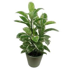 artificial tree 90cm large realistic variegated rubber plant artificial tree ficus