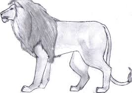 sketch of a lion the best lion in 2017