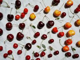 Seeking Bowl Of Cherries How Cherries Are Grown And Harvested Saveur