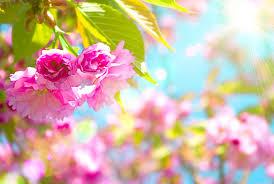 Pink Vs Wallpaper by Free Spring Wallpaper Wallpapersafari