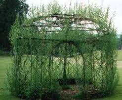 willow gazebo willow gazebo thisis so cool its growing garden ideas