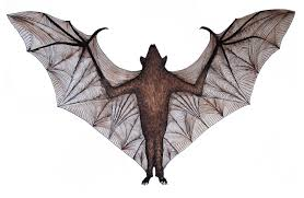 vampire bat images free download clip art free clip art on