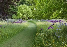 the 25 best meadow garden ideas on pinterest wild flower meadow