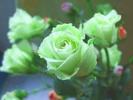 green roses green flowers flowers
