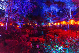 light display los angeles california s descanso gardens a forest of lights