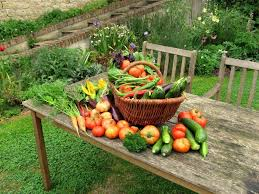 grow your own vegetables summerhill garden centre