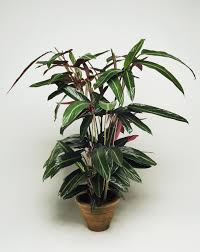 how plants that are difficult to grow high maintenance house plants