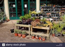 native plants ontario indigenous plants stock photos u0026 indigenous plants stock images