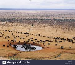 Park West Landscape by Geography Travel Kenya Tsavo Park West Herd Of Buffalo At