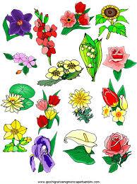 fiori disegni fiori disegni da colorare