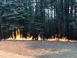 Wildfire Wedding Photos by Wildfires In Oregon Gov Brown Declares State Of Emergency That
