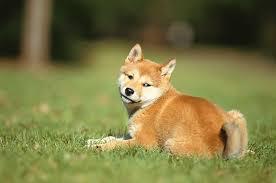 american eskimo dog odor 5 reasons your dog smells bad dogtime