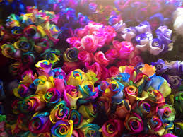 tie dye roses rainbow roses galore fiftyflowers the