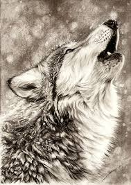 georgeous and amazing drawing technique for fur u0026 animals in