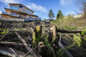 city considers felony charges in illegal west seattle clear cut