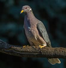 birdfellow birding services social networking and habitat