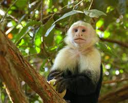 monkey species pictures on animal picture society amy animal