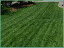 growing grasssuperior sod mulch and sod in wilmington